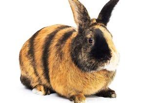 Tierische Topmodels: Kleintierzüchter am Tuniberg