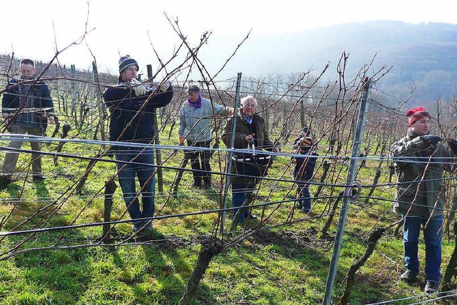 Weingut Blankenhorn - Schliengen