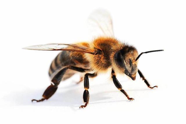 Bienen-Coop