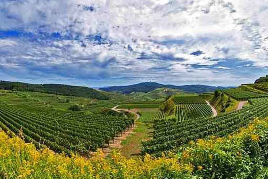 Weingut Hauser - B�tzingen