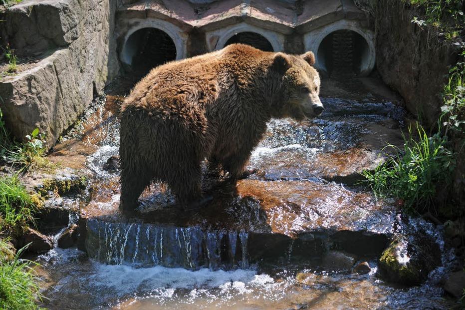 Wolf- und Bärenpark Schwarzwald - Schapbach