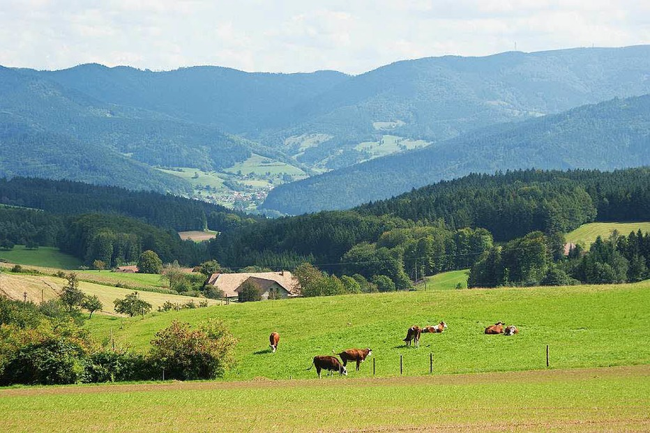 Rohrhardsberg - Elzach