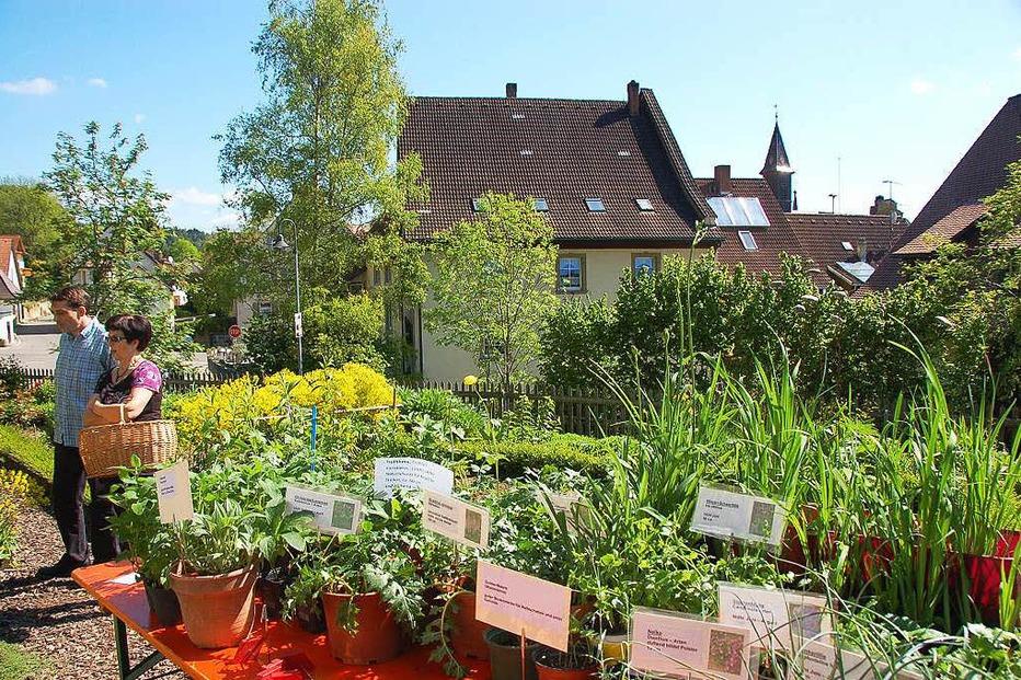 Schürgarten des Schwarzwaldvereines - Stühlingen