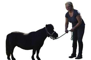 Samenspende: Mini-Pony Perla macht die Hengste an