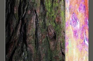 Denkmal für einen Baum