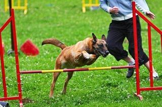 Verein f�r Deutsche Sch�ferhunde (Blansingen)