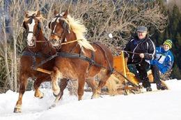 Fotos: Pferdeschlittenrennen in St. M�rgen
