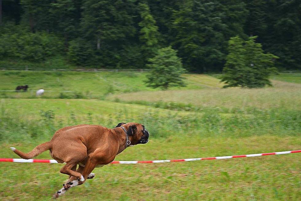 Vereinsheim Hundesportplatz - Hausen im Wiesental