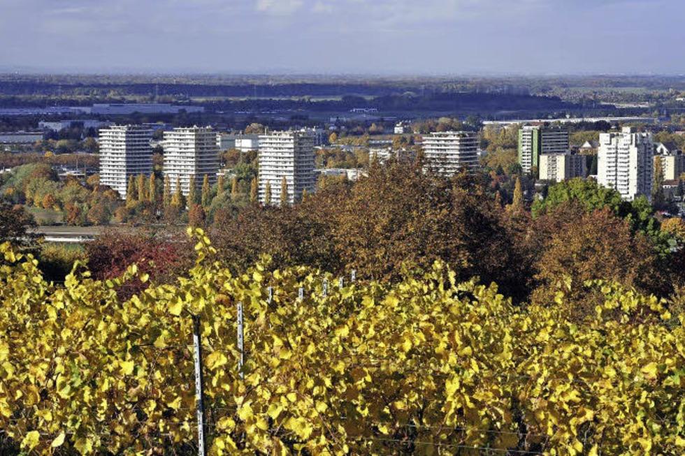 Letzte Etappe des Breisgauer Weinweges beginnt in Lahr und endet in Diersburg - Badische Zeitung TICKET