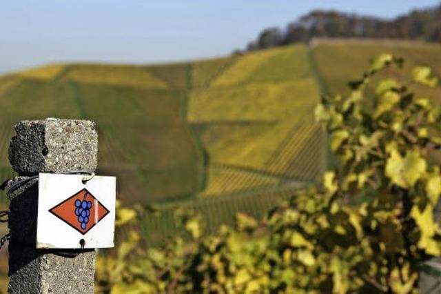 Die erste Etappe auf dem Ortenauer Weinpfad