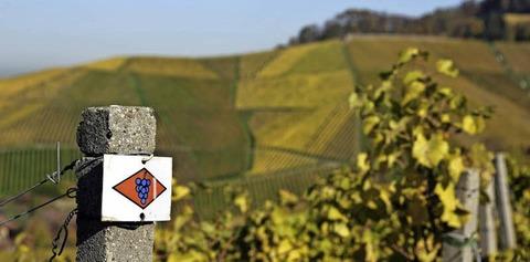 Die erste Etappe auf dem Ortenauer Weinpfad - Badische Zeitung TICKET