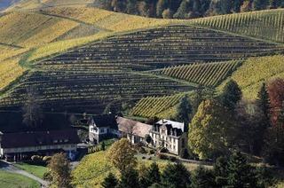 Zweite Etappe des Ortenauer Weinpfads