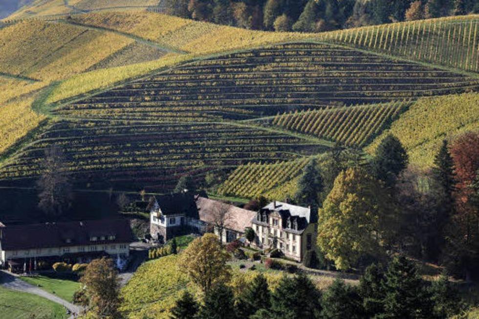 Zweite Etappe des Ortenauer Weinpfads - Badische Zeitung TICKET