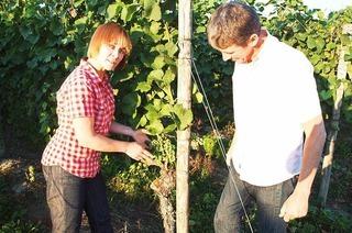 Weingut M��ner (K�ndringen)