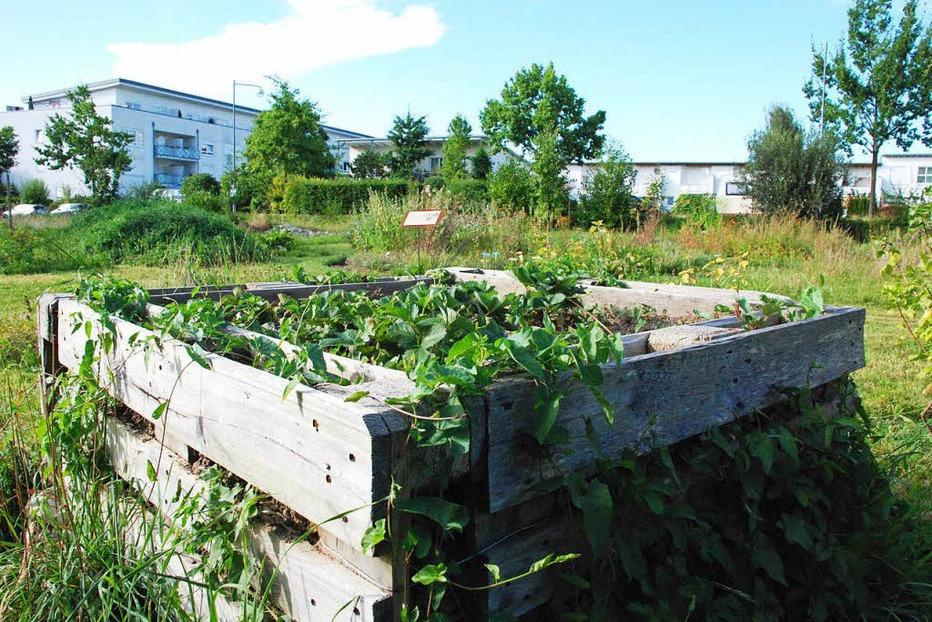 Naturentdeckergarten - L�rrach