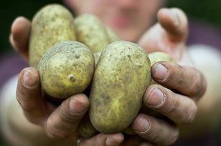 Hänslers Obst- und Gemüselädele (Waltershofen)
