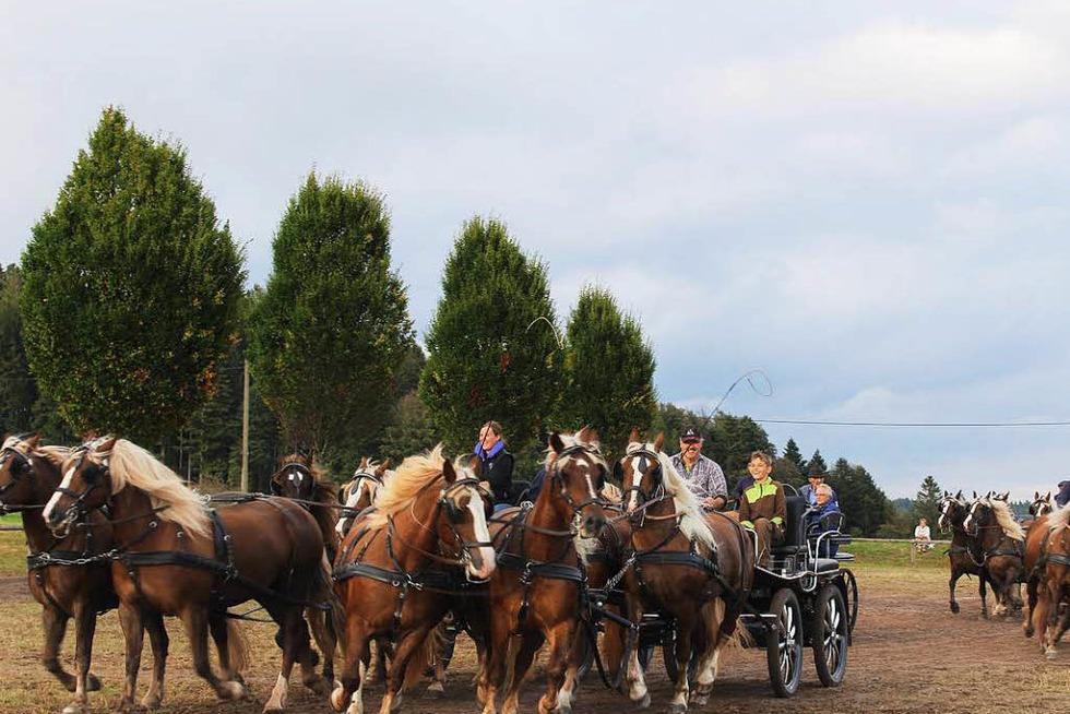 30.000 kommen zum Rossfest in St. Märgen - Badische Zeitung TICKET