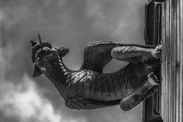 Fotos: Ungewöhnliche Sicht auf das Freiburger Münster