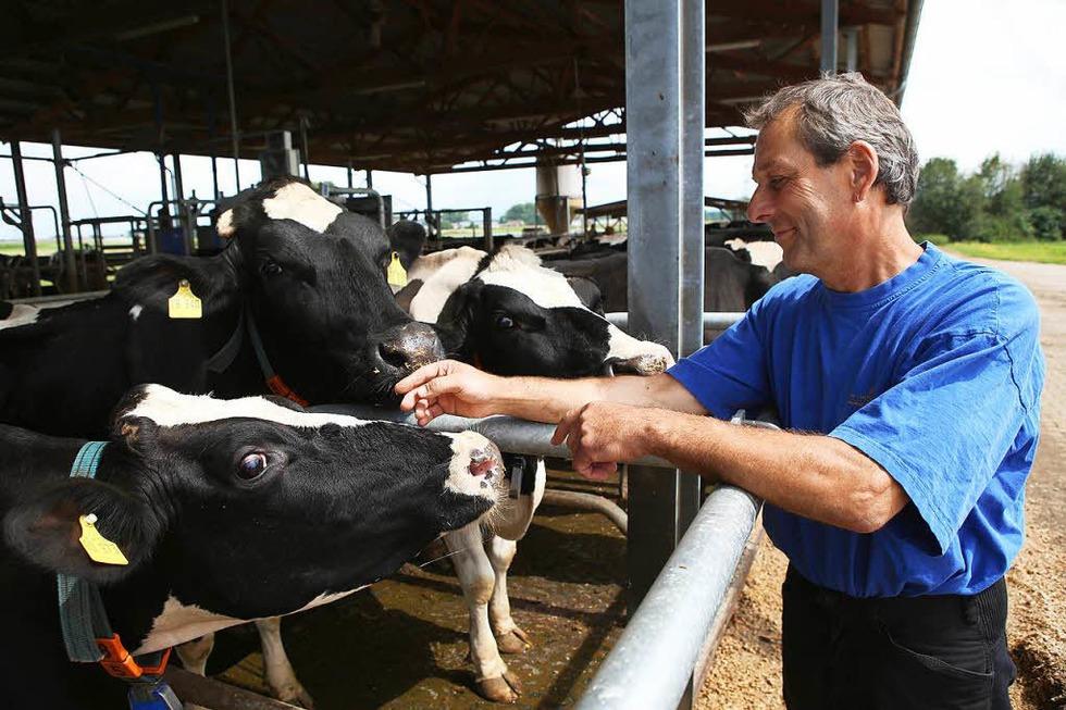 Milchviehbetrieb Familie Haas und Zinsel (Altenheim) - Neuried