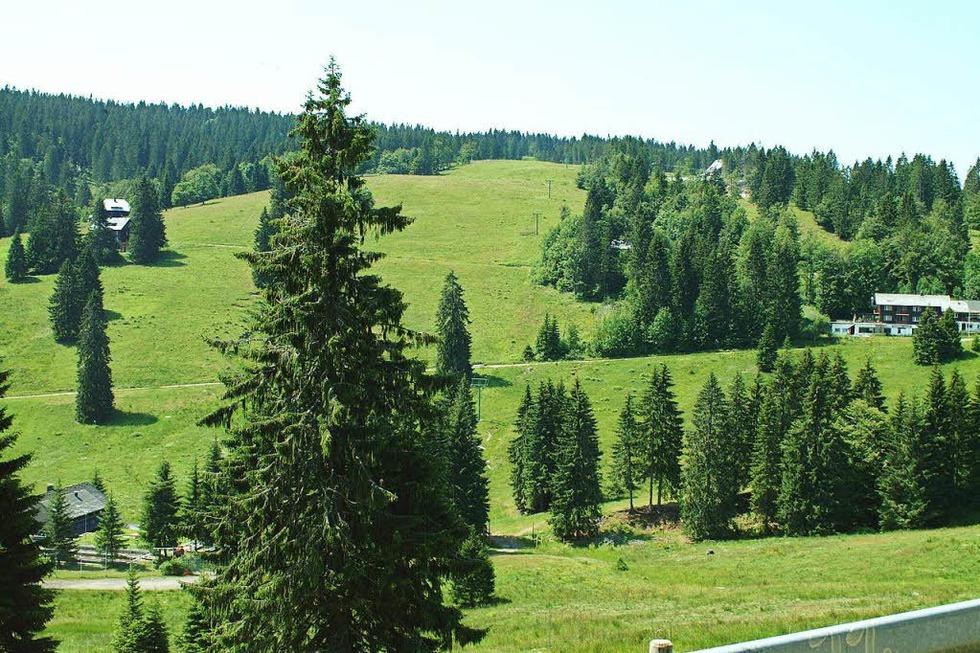 Zeller Hang am Feldberg - Todtnau