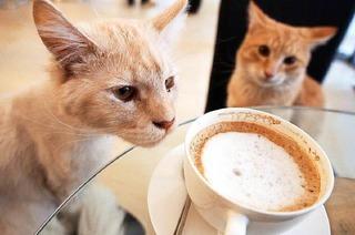 Heidruns Katzencaf�
