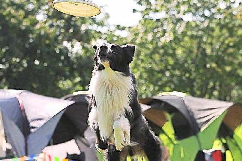 Hundeplatz - Kirchzarten