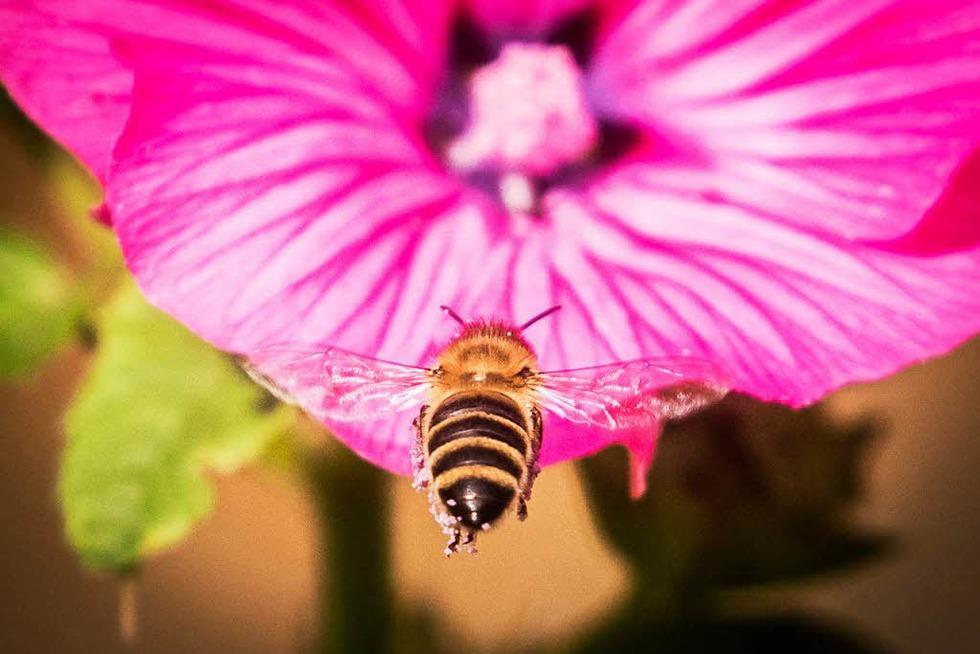 Bienenlehrpfad - Vöhrenbach