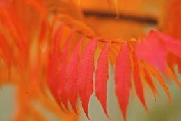 Fotos: Im Herbst ist Südbadens Natur herrlich bunt