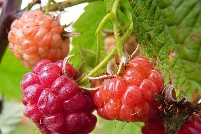 Obstbau Müller (Zusenhofen)