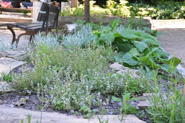 Urban Gardening im Rosenfelspark