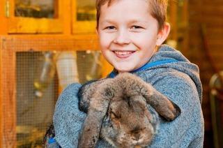 3800 Kaninchen bei der großen Landesschau in der Ortenauhalle