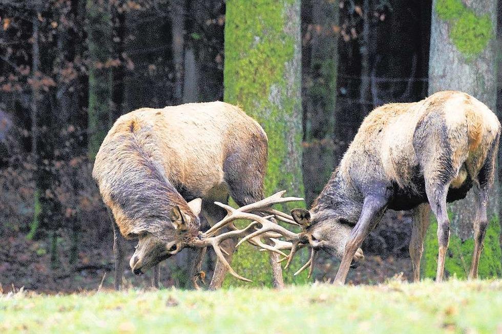 Wildgehege - Waldshut-Tiengen