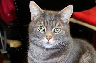 Lörrach: Katze sperrt Frauchen aus der Wohnung aus