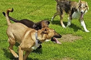 Hundesportverein in Müllheim