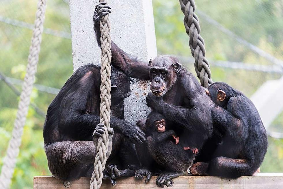 Zoo Basel (Zolli) - Basel