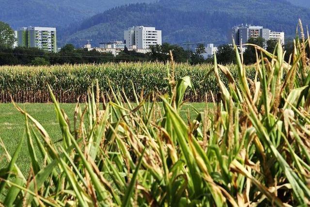 In Dietenbach sollen mehr als 12.500 Menschen wohnen