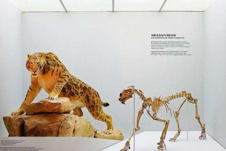 Naturhistorisches Museum - Basel