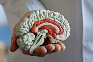 Basel feiert die Internationale Woche des Gehirns