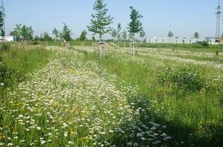 Gartenanlage Im Entenschwumm (Haltingen)