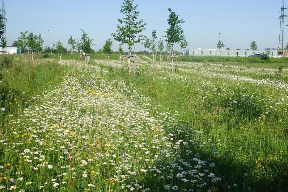 Gartenanlage Im Entenschwumm (Haltingen) - Weil am Rhein