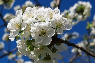 Raus in die Natur - 5 Tipps für einen bezaubernden Frühling