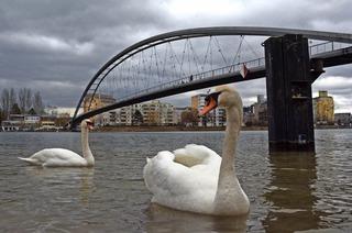 Musikalisch-geschichtlicher Spaziergang zu Brücken in Weil am Rhein
