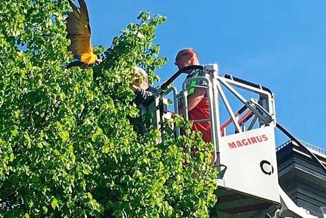 Feuerwehr rettet Papagei mit Drehleiter aus einem Baum