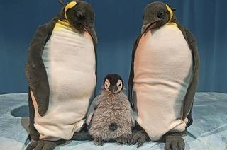"""Marotte zeigt """"Pit Pinguin"""" im Freiburger Vorderhaus"""