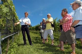 Anlage Rebenzüchtung (Staatliches Weinbauinstitut)