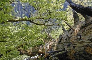 Natur und Kultur in Höchenschwand