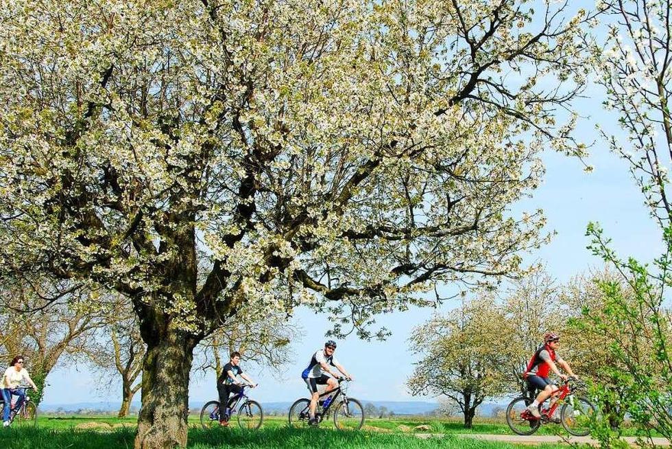 Eine Tour für Genießer: Der Kaiserstuhl-Radweg - Badische Zeitung TICKET