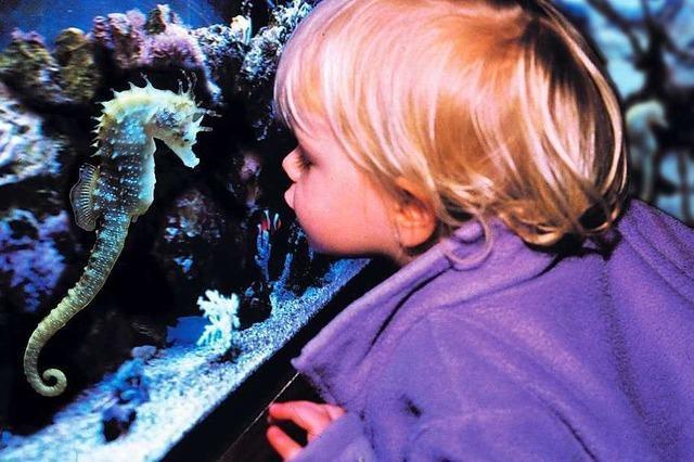 Sea-Life Großaquarium
