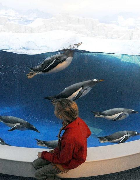 Sea-Life Großaquarium - Konstanz