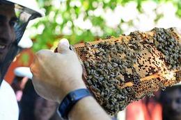 Fotos: Bienentag auf dem Freiburger Mundenhof